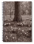 Daffodil Glade Number 2 Bw Spiral Notebook