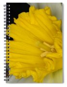 Daffodil On Black Spiral Notebook