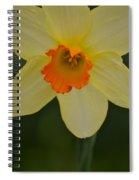 Daffodilicious Spiral Notebook