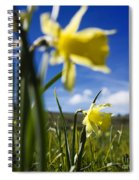 Daffodils In Cezallier. Auvergne. France. Europe Spiral Notebook