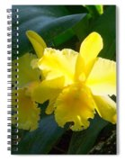 Daffodils In The Wild Spiral Notebook