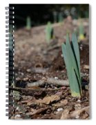 Daffodils Narcissus Spiral Notebook