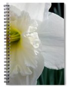 Daffy-down-dilly Spiral Notebook