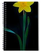 Dafodil Panorama 4432 Spiral Notebook