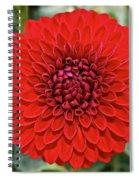 Dahlia 4001 Spiral Notebook