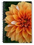 Dahlia 7001 Spiral Notebook