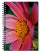 Dahlia Candles Spiral Notebook