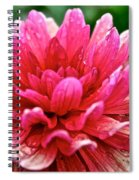 Dahlia Dew Drops Spiral Notebook