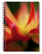 Dahlia Feuer Spiral Notebook