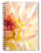 Dahlia Flower 01 Spiral Notebook