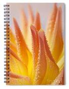 Dahlia Flower 14 Spiral Notebook