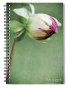 Dahlia Flower 2 Spiral Notebook