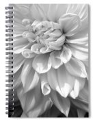 Dahlia In Black And White Spiral Notebook