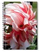 Dahlia Named Myrtle's Brandy Spiral Notebook