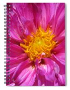 Dahlia Named Pink Bells Spiral Notebook