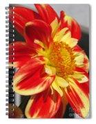 Dahlia Named Pooh Spiral Notebook