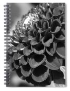 Dahlia Named Pride Of Place Spiral Notebook