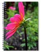 Dahlia Profile Spiral Notebook