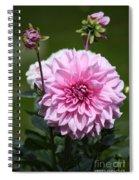 Dahlia Standout Spiral Notebook
