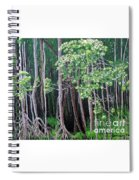Daintree Forest At Twilight Spiral Notebook