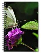 Dainty Butterfly 2 Spiral Notebook