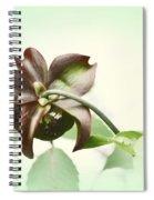 Dainty Spiral Notebook