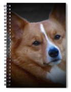 Daisie Our Corgi Spiral Notebook