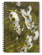 Daisies Blowin In The Wind Spiral Notebook