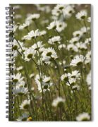 Daisy Fields Forever - Alabama Wildflowers Spiral Notebook