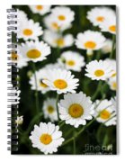 Daisy In A Field Spiral Notebook