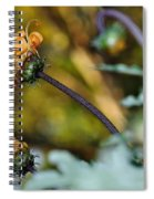 Daisy With Curls Spiral Notebook