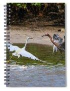 Dancing Egrets Spiral Notebook