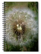 Dandelion Going To Seed Spiral Notebook