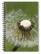 Dandelion Half Gone Spiral Notebook