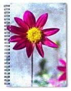 Dark Pink Dahlia On Blue Spiral Notebook
