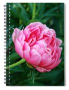 Dark Pink Peony Flower Series 2 Spiral Notebook