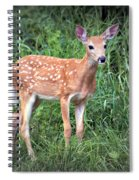 Darling Fawn Spiral Notebook