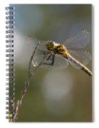 Darter 3 Spiral Notebook
