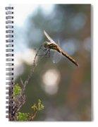 Darter 4 Spiral Notebook