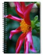 Dashing Dahlia Spiral Notebook