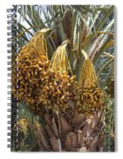 Date Palm In Fruit Spiral Notebook