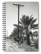 Date Palms On A Country Road Spiral Notebook