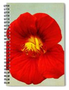 Daylily On Texture Spiral Notebook