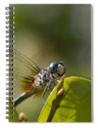 Dazzling Blue Skimmer Spiral Notebook