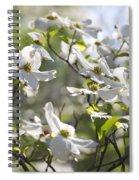 Dazzling Sunlit White Spring Dogwood Blossoms Spiral Notebook