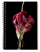 Dead Dried Tulip Spiral Notebook