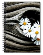 Dead Wood And Asters Spiral Notebook