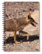 Death Valley Coyote Spiral Notebook