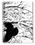 December Raven Spiral Notebook