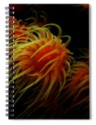 Deep Ocean Coral Polyp Spiral Notebook